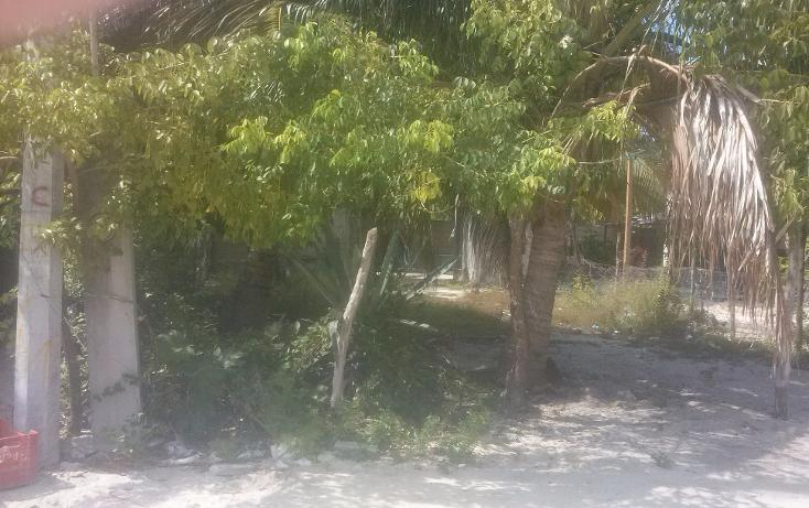 Foto de terreno habitacional en venta en  , isla aguada, carmen, campeche, 1374043 No. 02