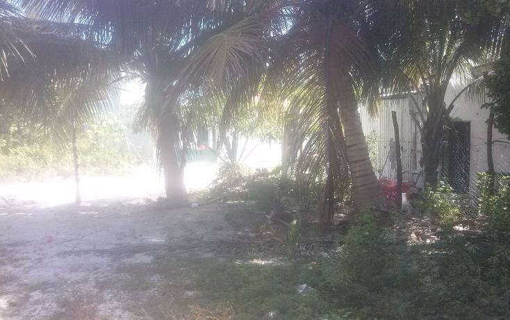 Foto de terreno habitacional en venta en  , isla aguada, carmen, campeche, 1374043 No. 07