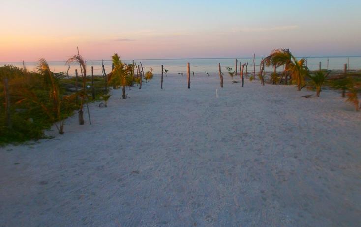 Foto de terreno habitacional en venta en  , isla aguada, carmen, campeche, 1526553 No. 12