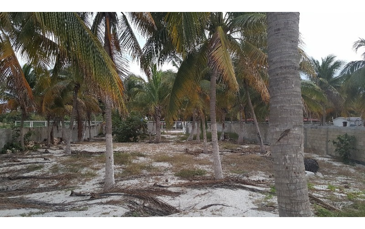 Foto de terreno habitacional en venta en  , isla aguada, carmen, campeche, 1861742 No. 01