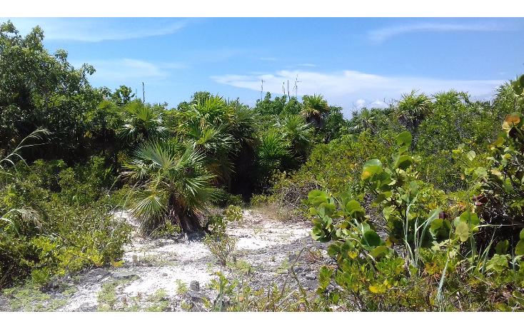 Foto de terreno habitacional en venta en  , isla blanca, isla mujeres, quintana roo, 1489317 No. 11