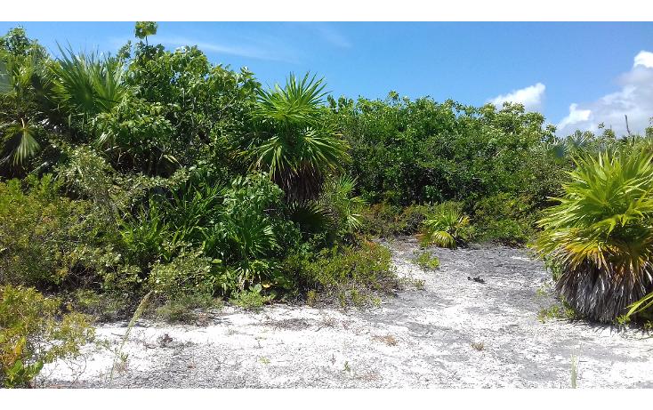 Foto de terreno habitacional en venta en  , isla blanca, isla mujeres, quintana roo, 1489317 No. 12