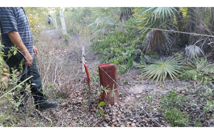 Foto de terreno comercial en venta en  , isla blanca, isla mujeres, quintana roo, 1612520 No. 06