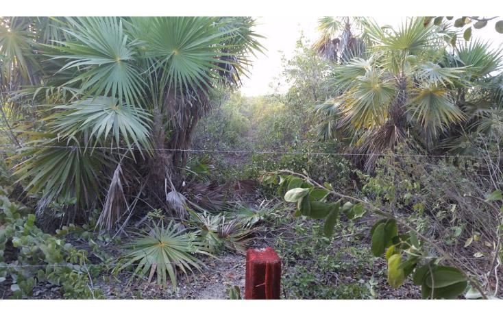 Foto de terreno comercial en venta en  , isla blanca, isla mujeres, quintana roo, 1612520 No. 07