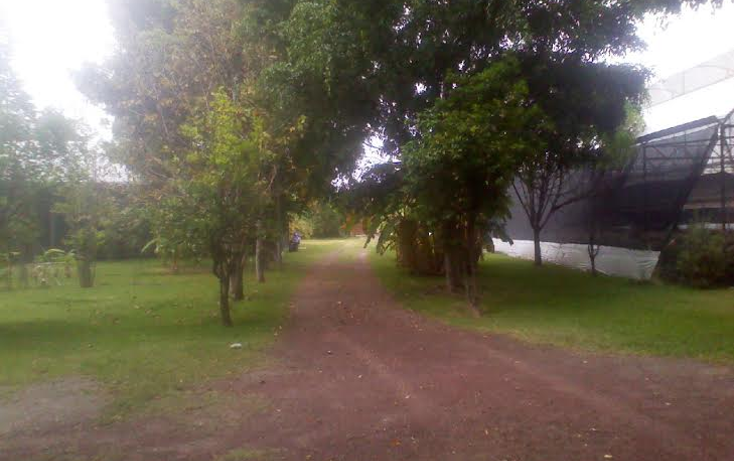 Foto de casa en venta en  , itzamatitl?n, yautepec, morelos, 1382297 No. 06