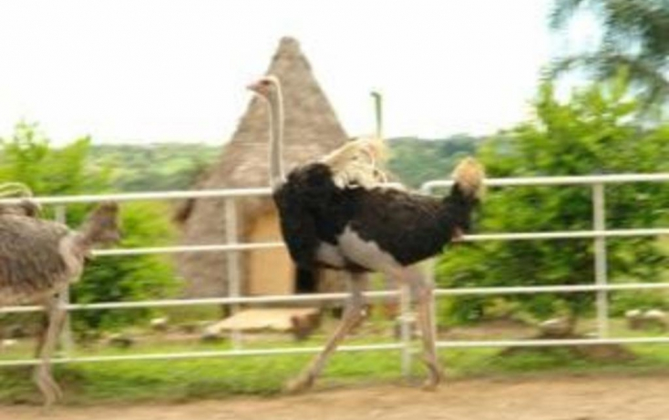 Foto de rancho en venta en, jalcomulco, jalcomulco, veracruz, 772889 no 01
