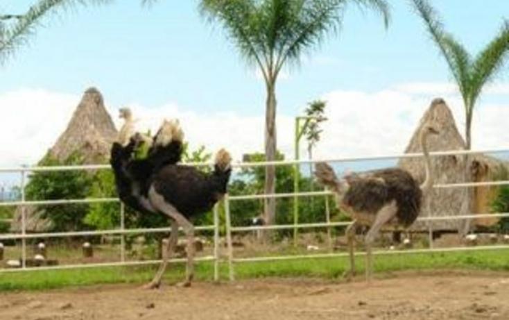 Foto de rancho en venta en, jalcomulco, jalcomulco, veracruz, 772889 no 05