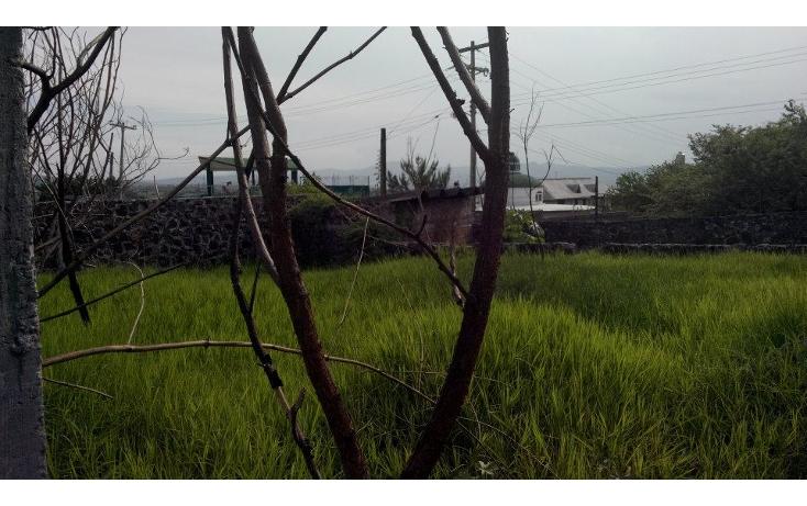 Foto de terreno habitacional en venta en  , jos? ortiz (san mart?n), yautepec, morelos, 1638152 No. 07
