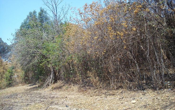 Foto de terreno habitacional en venta en  , nepantla de sor juana inés, tepetlixpa, méxico, 1986229 No. 05