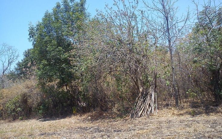 Foto de terreno habitacional en venta en  , nepantla de sor juana inés, tepetlixpa, méxico, 1986229 No. 06