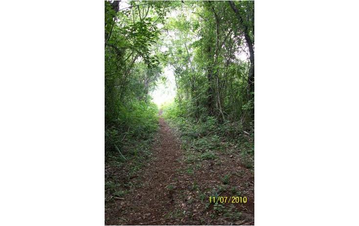 Foto de terreno comercial en venta en  , kaua, kaua, yucatán, 1099687 No. 05