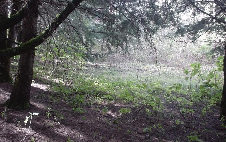 Foto de terreno habitacional en venta en kilometro 4 carretera casas quemadas - mineral del chico , bosques de san cayetano, mineral del monte, hidalgo, 1514626 No. 02