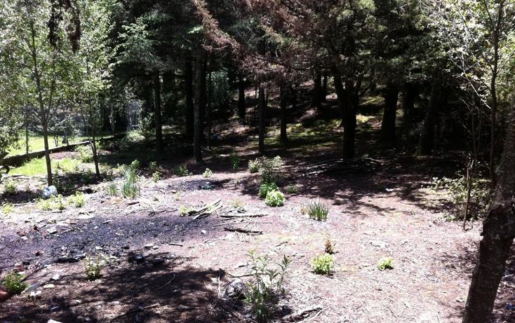 Foto de terreno habitacional en venta en kilometro 4 carretera casas quemadas - mineral del chico , bosques de san cayetano, mineral del monte, hidalgo, 1514626 No. 04
