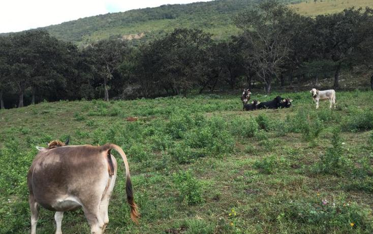 Foto de terreno comercial en venta en kilometro 6 , gabriel esquinca, san fernando, chiapas, 1496941 No. 17