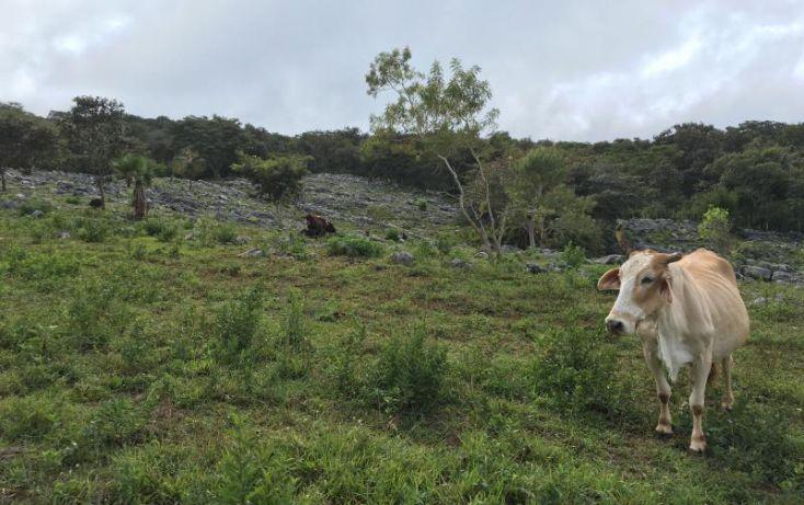 Foto de terreno comercial en venta en km 6, gabriel esquinca, san fernando, chiapas, 1496941 no 15