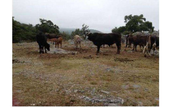 Foto de rancho en venta en  , la calera, zaragoza, san luis potosí, 1085601 No. 03