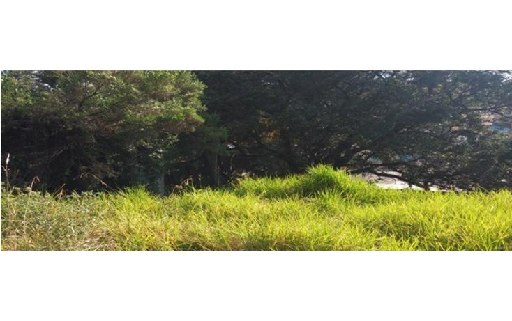 Foto de terreno habitacional en venta en  , la colmena, nicol?s romero, m?xico, 943907 No. 01
