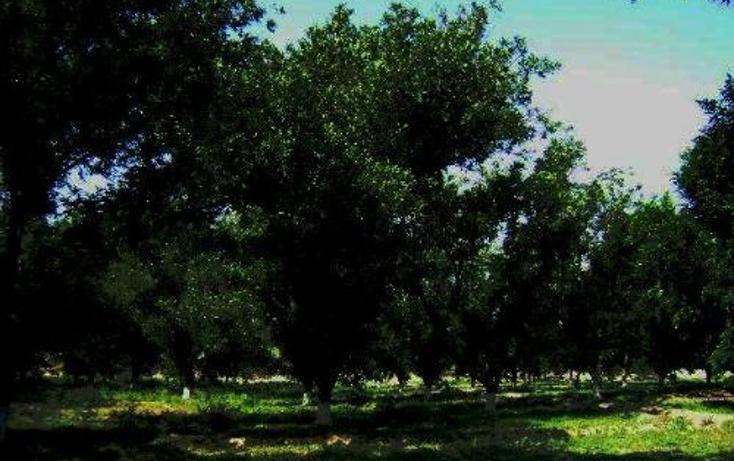Foto de terreno comercial en venta en  , la concha, torreón, coahuila de zaragoza, 399824 No. 02