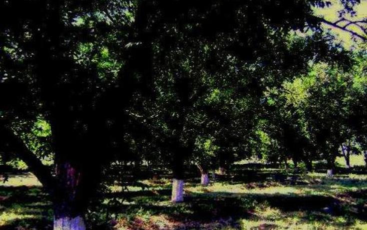 Foto de terreno comercial en venta en  , la concha, torreón, coahuila de zaragoza, 399824 No. 04