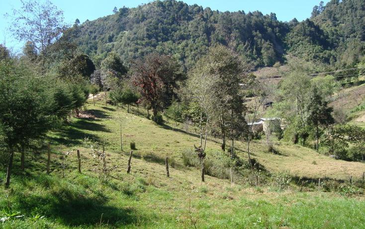 Foto de rancho en venta en  , la garita, san cristóbal de las casas, chiapas, 1678333 No. 07