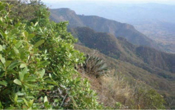 Foto de terreno habitacional en venta en  , la goleta, amatepec, méxico, 1125981 No. 03