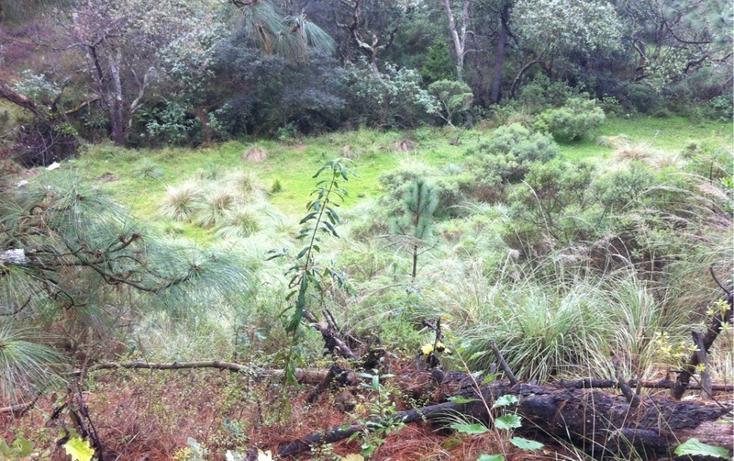 Foto de terreno habitacional en venta en la manzana de san carlos , monte de peña, villa del carbón, méxico, 1384443 No. 12