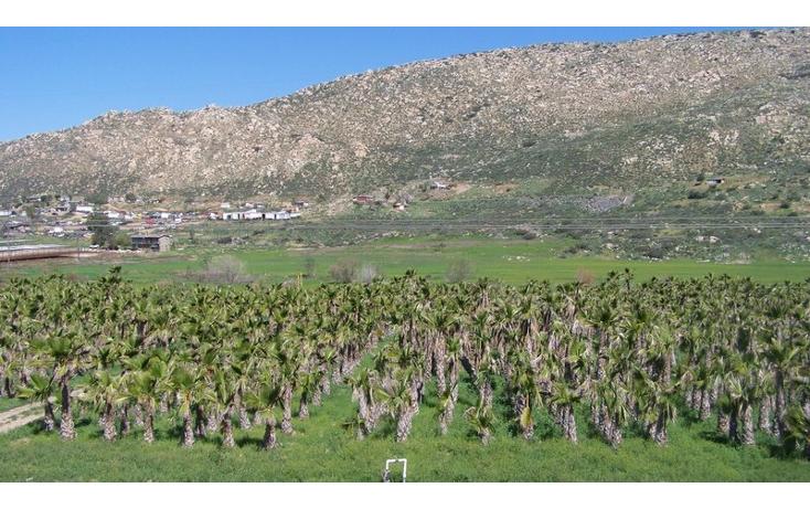 Foto de terreno comercial en venta en  , la sierra, tecate, baja california, 1213621 No. 07