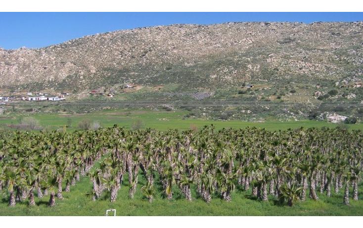 Foto de terreno comercial en venta en  , la sierra, tecate, baja california, 1213621 No. 10