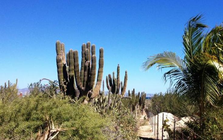 Foto de terreno habitacional en venta en  , la ventana, la paz, baja california sur, 948827 No. 02