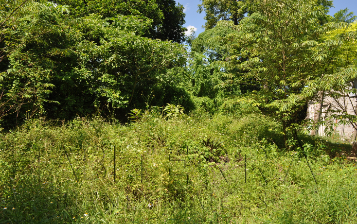 Foto de terreno habitacional en venta en  , las lomas, tuxpan, veracruz de ignacio de la llave, 1162189 No. 03