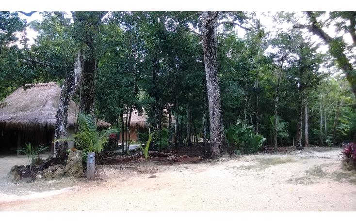 Foto de terreno habitacional en venta en  , leona vicario, benito juárez, quintana roo, 1115219 No. 03