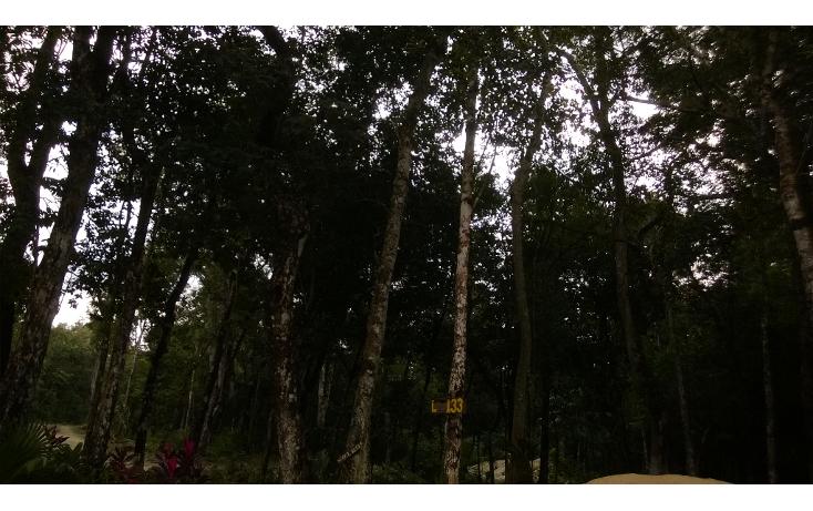 Foto de terreno habitacional en venta en  , leona vicario, benito juárez, quintana roo, 1115219 No. 04