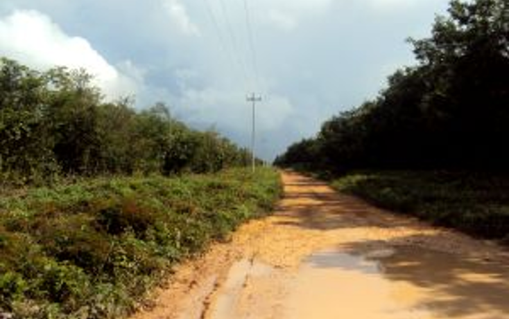 Foto de terreno comercial en venta en  , leona vicario, benito ju?rez, quintana roo, 1266687 No. 06