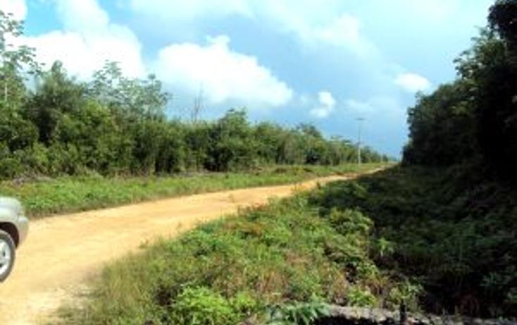 Foto de terreno comercial en venta en  , leona vicario, benito juárez, quintana roo, 1266687 No. 08