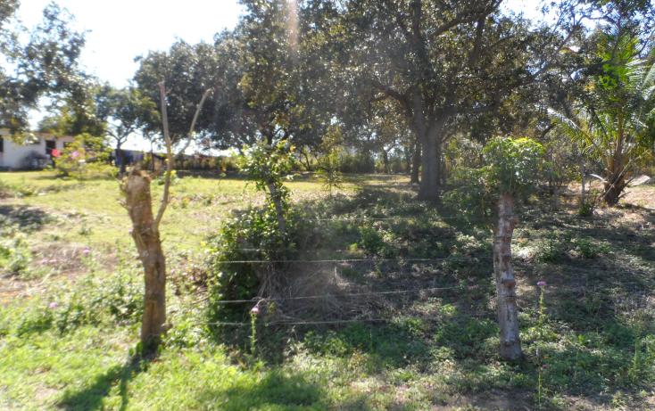 Foto de terreno habitacional en venta en  , lindavista, pueblo viejo, veracruz de ignacio de la llave, 1246601 No. 03
