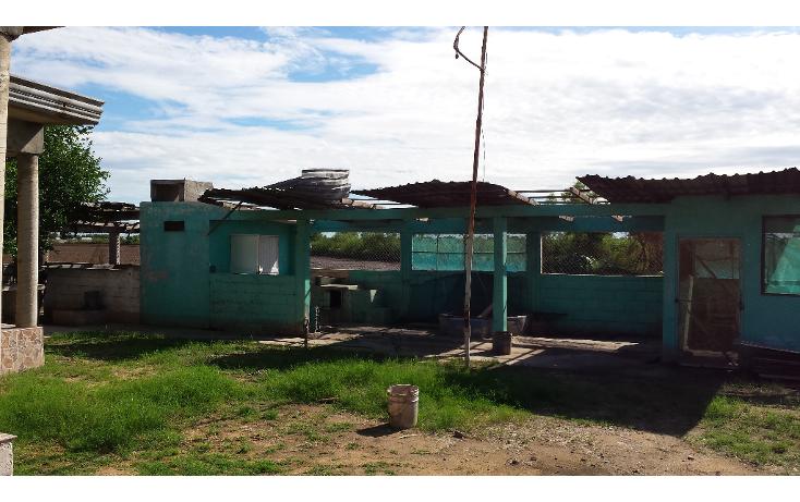 Foto de rancho en venta en  , lo de sauceda, navolato, sinaloa, 1142323 No. 10