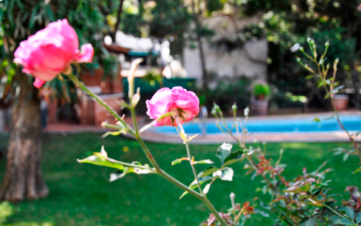 Foto de casa en renta en  , lomas de atzingo, cuernavaca, morelos, 1051755 No. 16