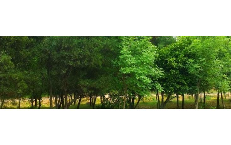 Foto de terreno habitacional en venta en  , lomas del río, naucalpan de juárez, méxico, 1835610 No. 08