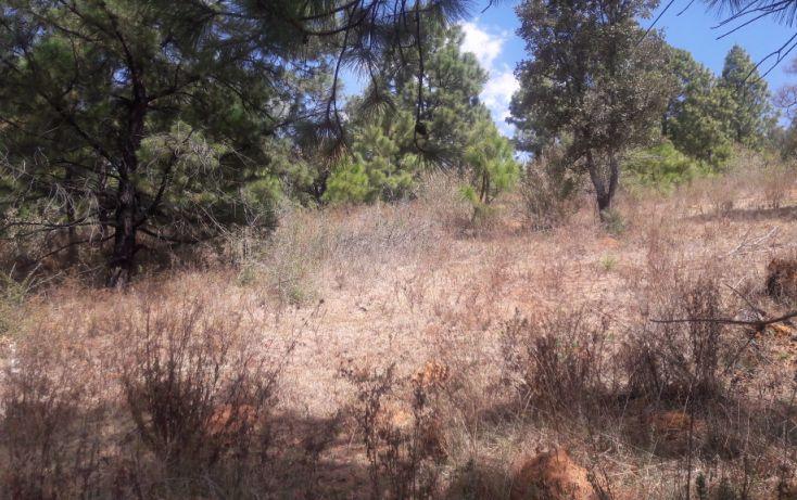 Foto de terreno habitacional en venta en, los espinos, tapalpa, jalisco, 1692342 no 02