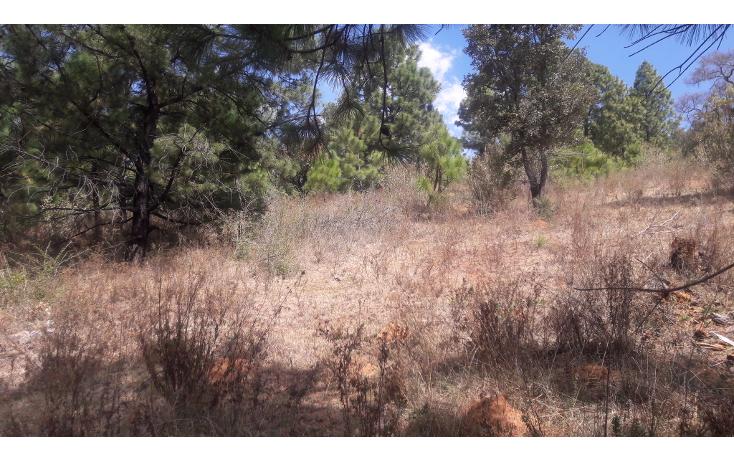 Foto de terreno habitacional en venta en  , los espinos, tapalpa, jalisco, 1692342 No. 02