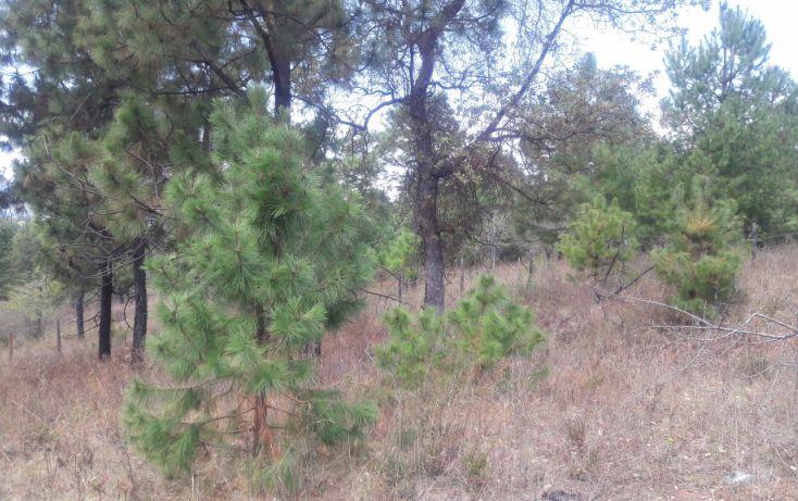 Foto de terreno habitacional en venta en, los espinos, tapalpa, jalisco, 1692342 no 03
