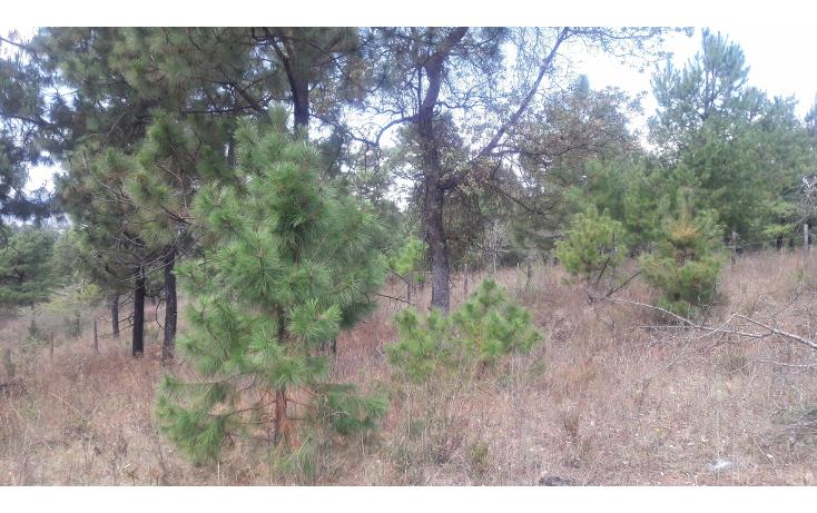 Foto de terreno habitacional en venta en  , los espinos, tapalpa, jalisco, 1692342 No. 03