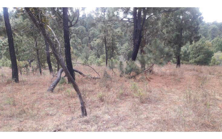 Foto de terreno habitacional en venta en  , los espinos, tapalpa, jalisco, 1692342 No. 04