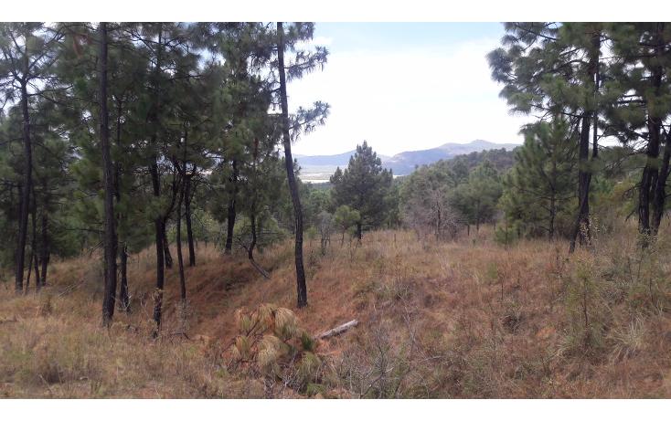 Foto de terreno habitacional en venta en  , los espinos, tapalpa, jalisco, 1692342 No. 07