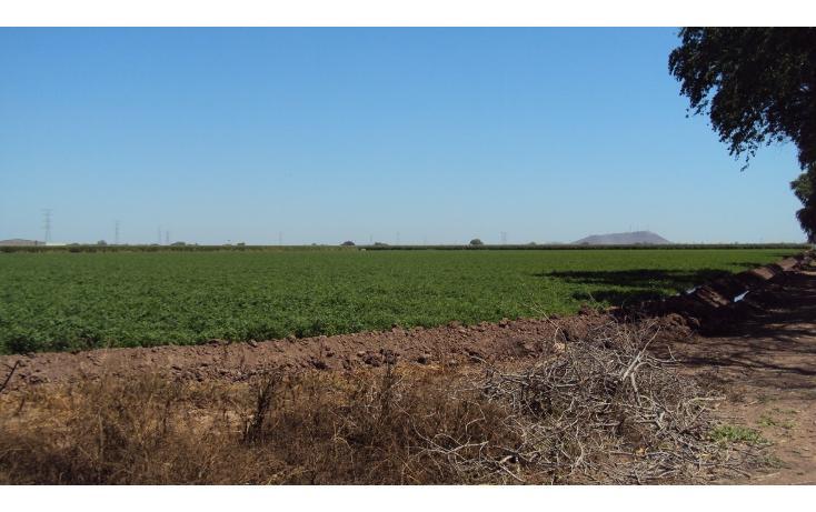 Foto de terreno habitacional en venta en  , los mochis, ahome, sinaloa, 1717192 No. 03