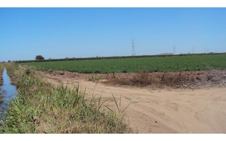 Foto de terreno habitacional en venta en  , los mochis, ahome, sinaloa, 1717192 No. 04