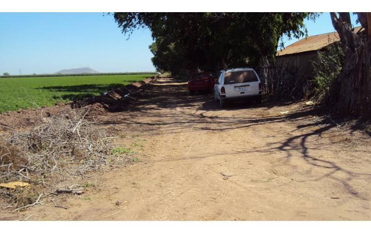 Foto de terreno habitacional en venta en  , los mochis, ahome, sinaloa, 1717192 No. 06