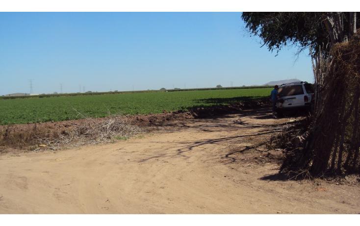 Foto de terreno habitacional en venta en  , los mochis, ahome, sinaloa, 1717192 No. 07