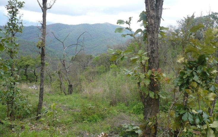 Foto de terreno habitacional en venta en  , los timbres, temascaltepec, méxico, 829483 No. 08