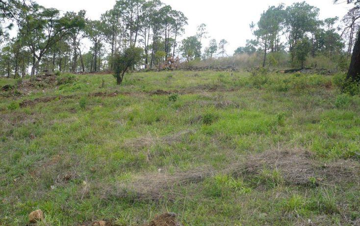 Foto de terreno habitacional en venta en, los timbres, temascaltepec, estado de méxico, 829483 no 10